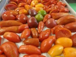 Abundance tomatoes